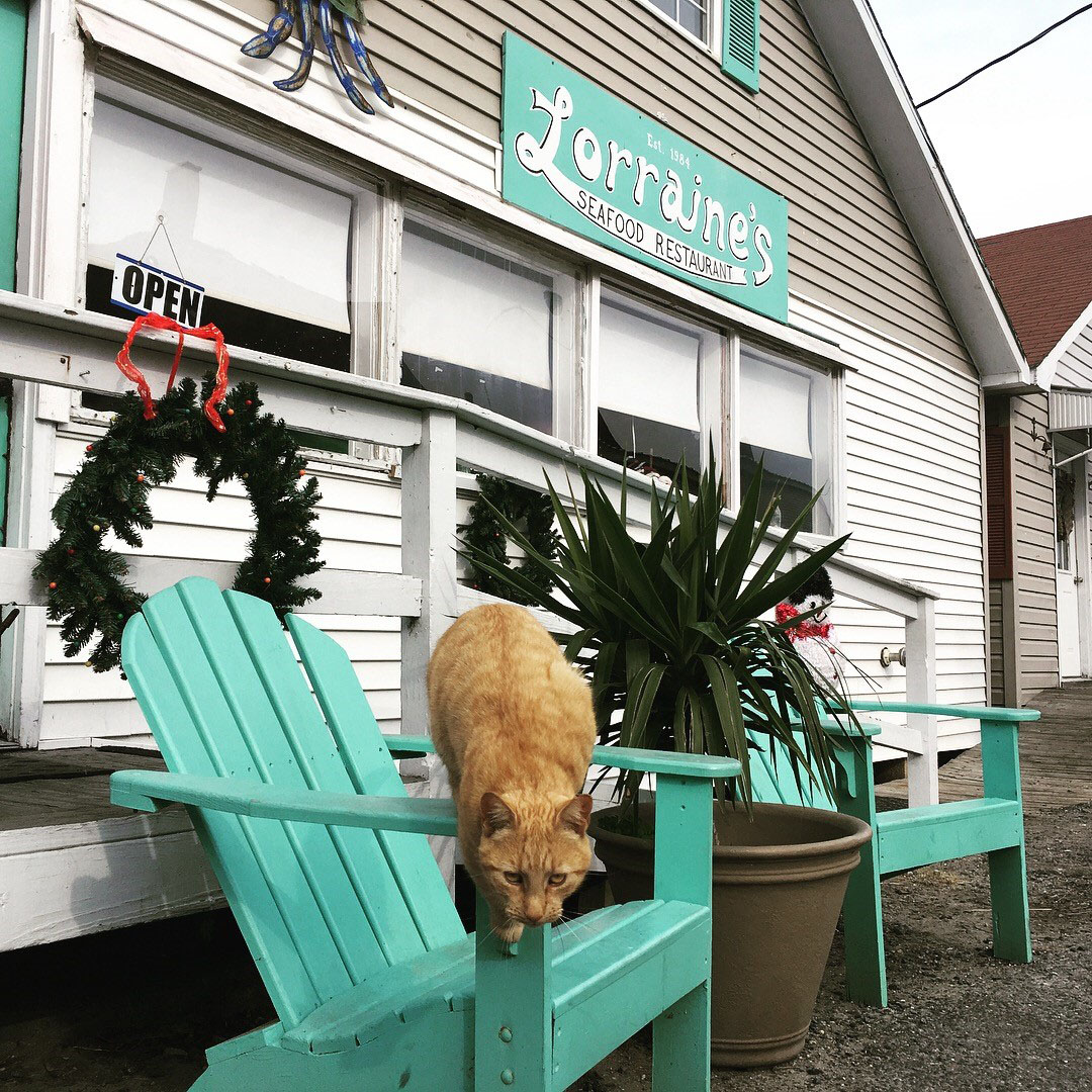 One of the many island cats leaps from its perch on a chair in front of Lorraine's restaurant. Photo by Joe Kildea.