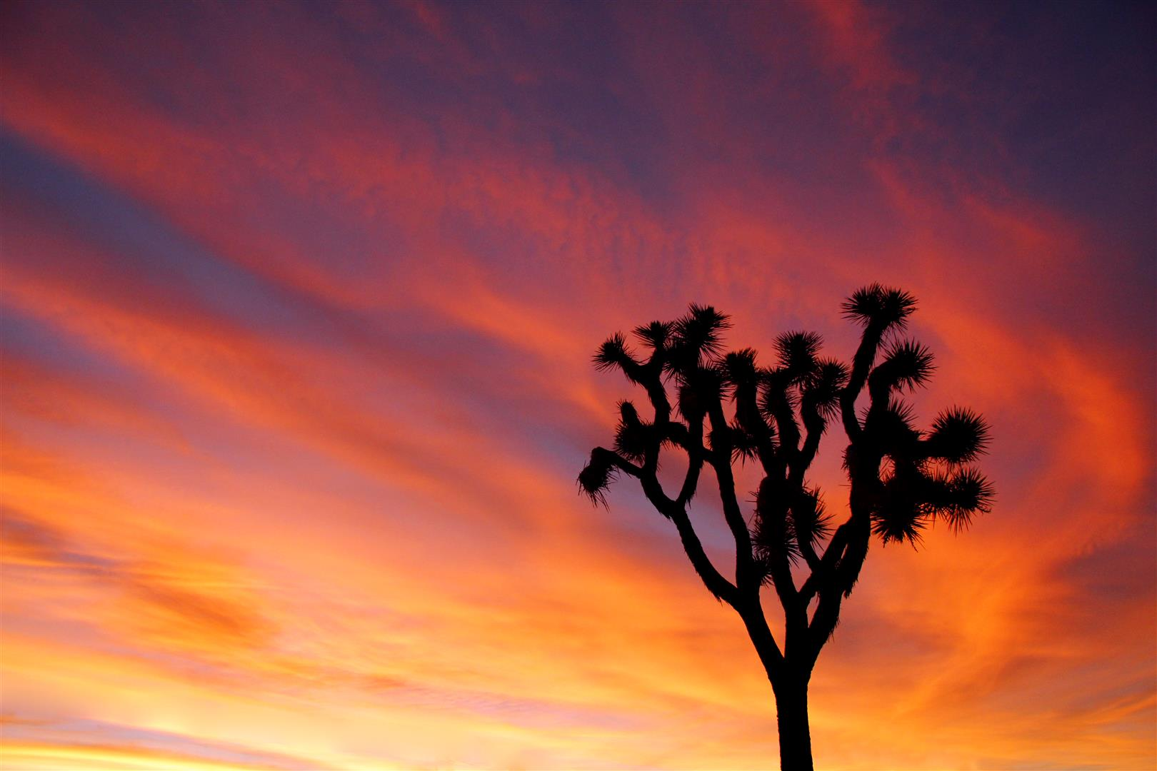 The wide-open desert of Joshua Tree National Park makes for stunning sunsets. The Mormon pioneers who named the trees saw their limbs as Joshua's arms, being raised in supplication and guiding them ever-westward. Photo by Brad Sutton, courtesy NPS.