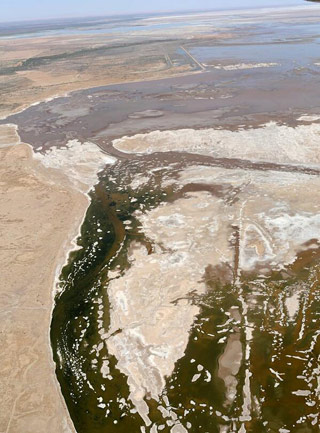 The Colorado River reaches the Gulf of California waters for the first time in decades. Photo courtesy of LightHawk.